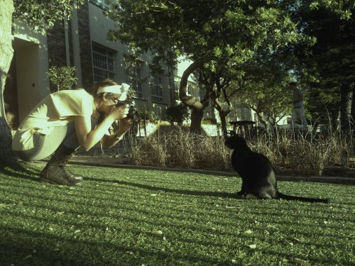 Girl taking a photo of a cat