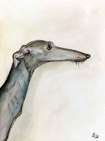 italian greyhound by artist elle j wilson