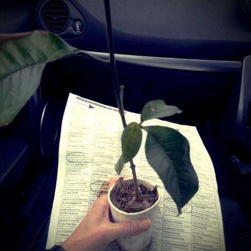 Made a eco-pledge for a free tree - 100 in 1 day Cape Town