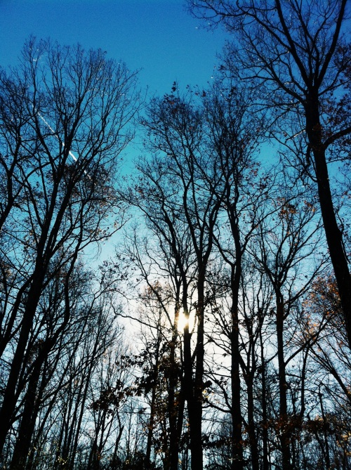 The trees and the sky.